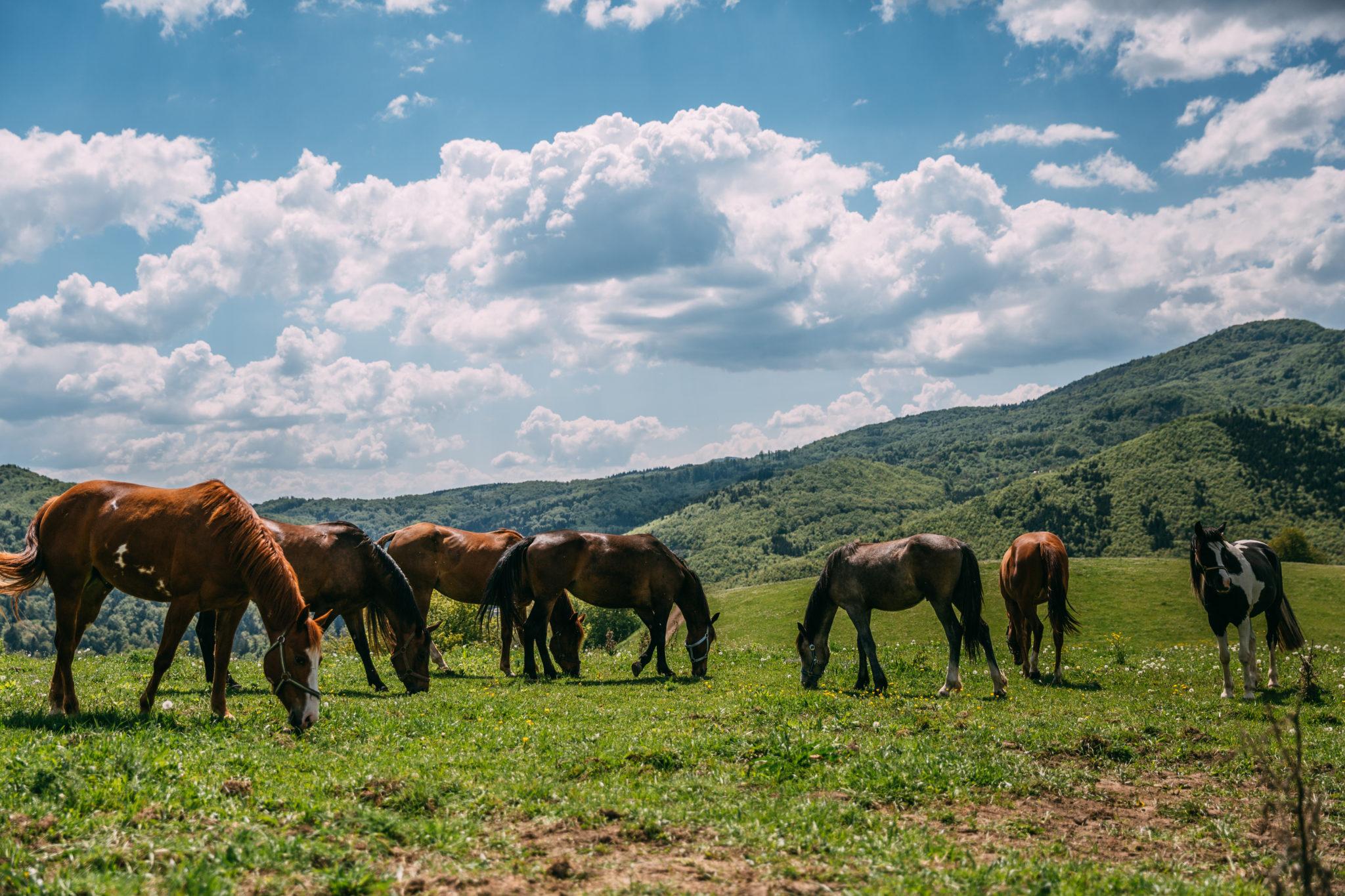 Kone v prírode - Jazdecký Areál Sv. Františka