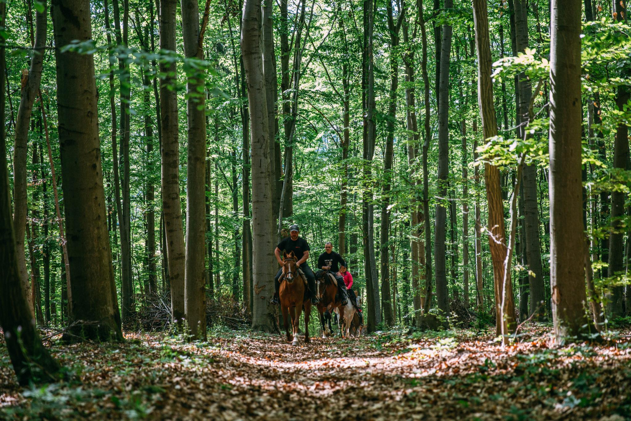 Jazdenie na koni v prírode - Jazdecký Areál Sv. Františka